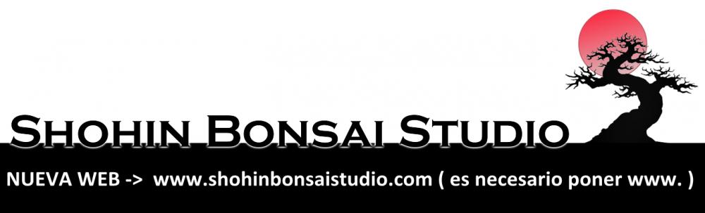 Shohin Bonsai Studio